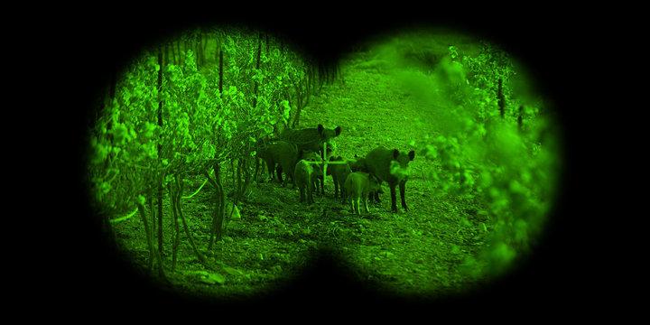 vue dans des jumelles de vision nocturne