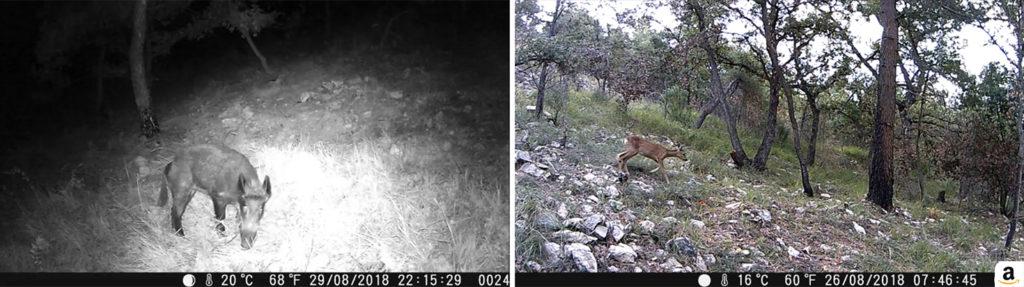 photo de captures vidéos réalisés avec la caméra de chasse coolife