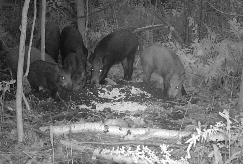 photo capturée à l'aide d'une caméra de chasse équipée d'une vision nocturne